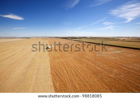 Aerial view of a combine harvesting lentils on the open prairie - stock photo