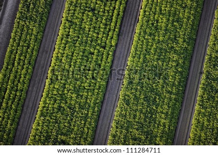 Aerial view of a field - stock photo