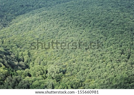 aerial view of a huge green forest - stock photo