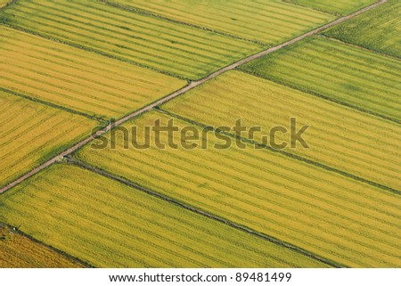 aerial view of a rice field - stock photo