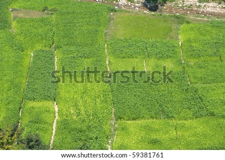 aerial view of abstract composition for green tobacco fields - stock photo