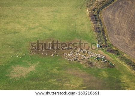 Aerial view of agricultural land with sheep herd - stock photo