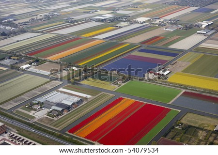 Aerial view of bulbfields, Netherlands - stock photo