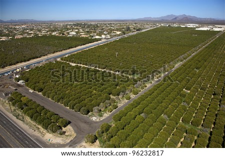Aerial view of citrus groves - stock photo