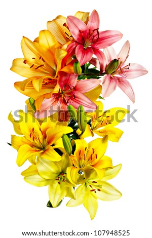 Aerial view of flowers. Variegated lilies on a white background - stock photo