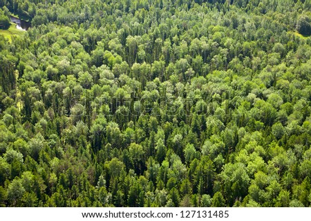 Aerial view of forest during a summer day. - stock photo