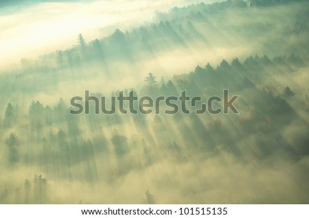 Aerial view of forest on a misty morning, Vermont - stock photo