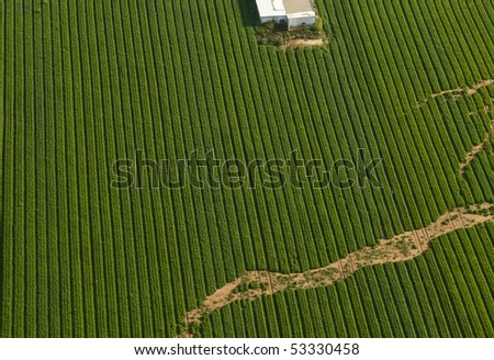 Aerial view of green carrot Field - stock photo