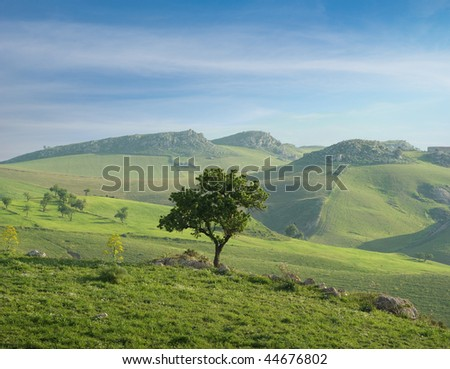 aerial view of lonely tree of almond in a green valley - stock photo
