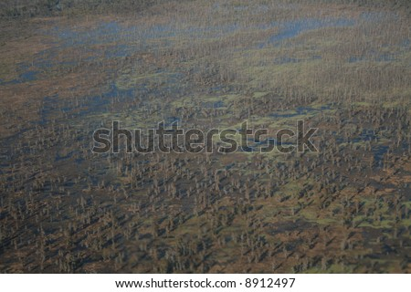 Aerial view of Louisiana swamp with trees - stock photo