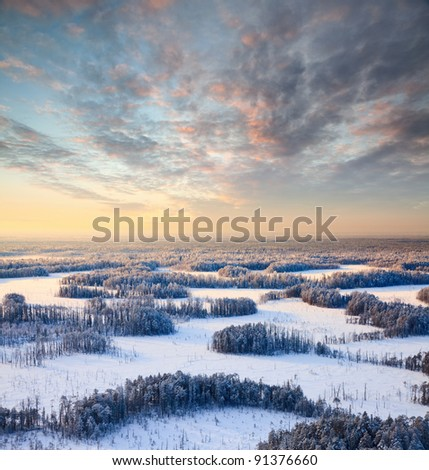 Aerial view of pine forest during a winter sunset. - stock photo