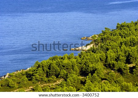 Aerial view of pine trees and sea.
