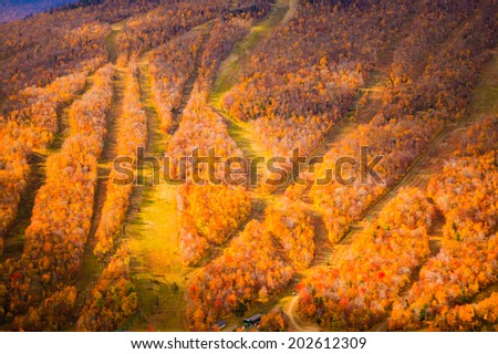 Aerial view of ski trails during fall foliage, Stowe, Vermont, USA - stock photo