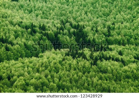 Aerial view of summer forest - stock photo