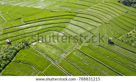 Aerial view of terraced rice fields in Bali, Indonesia.