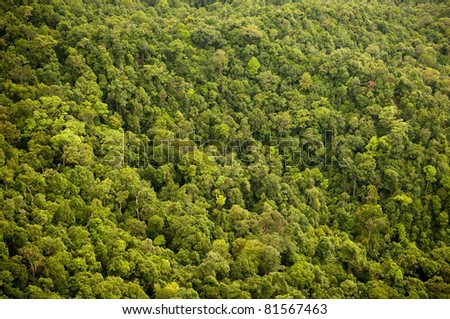 Aerial view of the forest / jungle canopy - stock photo