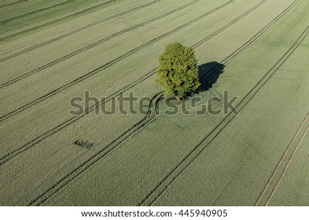 aerial view of the springtime harvest field in Poland - stock photo