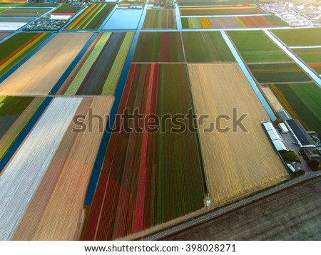 Aerial view of tulip field - stock photo