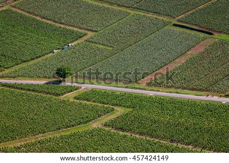 Aerial view of vineyards fields crossed by a road and a tree in the middle