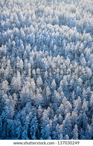 Aerial view of winter forest during frosty day. - stock photo