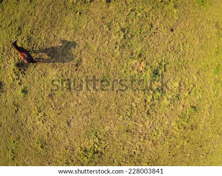 Aerial view over a pasture with a horse casting a shadow - stock photo
