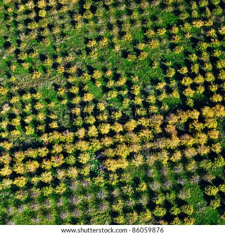 aerial view over agricultural gardens - stock photo