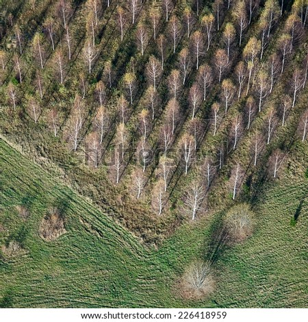 aerial view over the trees - stock photo