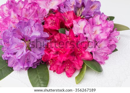 Aerial view pink red lilac Rhododendron blossoms white lace background  Closeup beautiful evergreen rhododendron bouquet national flower of Nepal, ideal for gardening, nature, wedding decoration blog - stock photo
