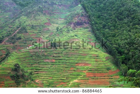 aerial view showing the border of the Bwindi Impenetrable Forest in Uganda (Africa) - stock photo