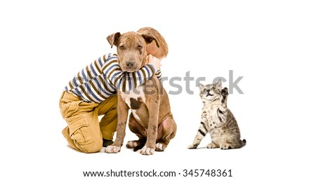 Affectionate child, pit bull puppy and a playful kitten, isolated on white background  - stock photo