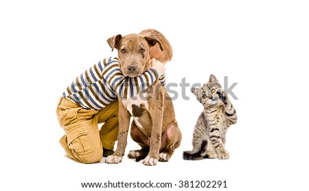 Affectionate kid, pit bull puppy and a playful kitten isolated on white background - stock photo