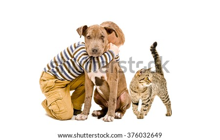 Affectionate kid, pit bull puppy and cat together, isolated on white background - stock photo
