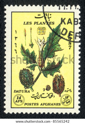 AFGANISTAN - CIRCA 1987: A stamp printed in AFGANISTAN shows image of a   Datura, herb series, circa 1987