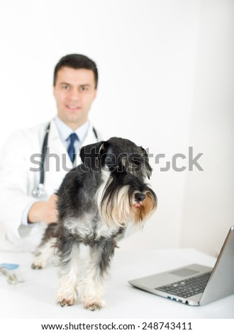 Afraid dog on veterinary examination standing on table - stock photo