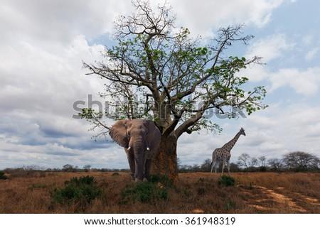 Africa Angola savanna  - stock photo