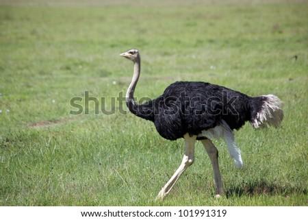 africa/birds/ - stock photo
