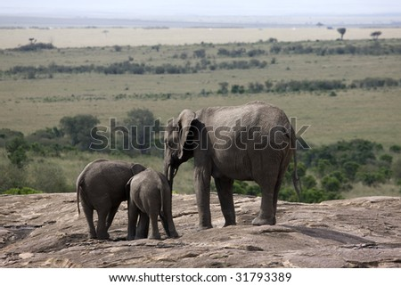 Africa. Kenia. Masai Mara National Park. elephant - stock photo