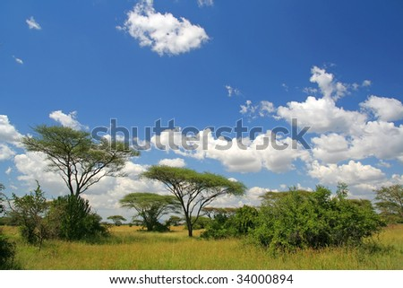 Africa landscape in Serengeti National Park, Tanzania - stock photo
