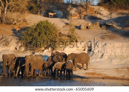 Africa landscape with elephant, monkeys and impala - stock photo