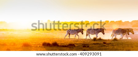 Africa sunset landscape with silhouetted Zebra in the dust of Botswana, Africa - stock photo