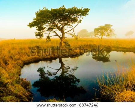 Africa Tree - stock photo
