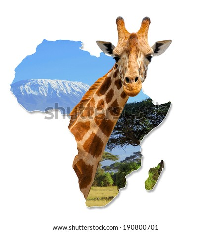 Africa Wildlife Map Design with giraffe and Kilimanjaro - Isolated on White - stock photo