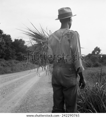 African American man in living in rural Mississippi near Vicksburg on a road where he has gathered some grass. His ragged clothing indicates his poverty. July 1936 photo by Dorothea Lange. - stock photo
