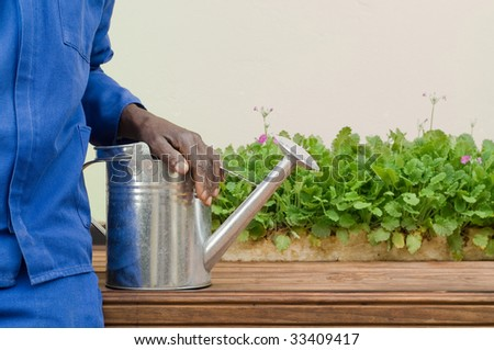 African American Resting Hand on Watering Can Next to Seedlings - stock photo