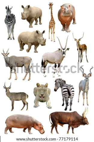 african animals collection isolated on white background - stock photo