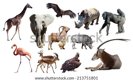 African animals. Isolated on white background - stock photo