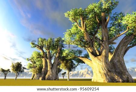 African baobab - stock photo
