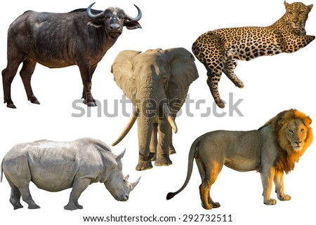African Big Five animals, Buffalo, Elephant, Leopard, White Rhino and Lion isolated on pure white background - stock photo