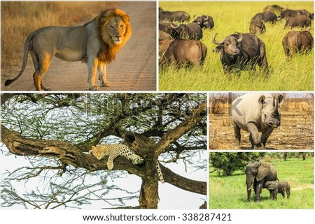 African Big Five animals collage, Buffalo, Elephant, Leopard, Black Rhino and Lion in national parks and african reserves like Kruger, Etosha and the Serengeti. - stock photo