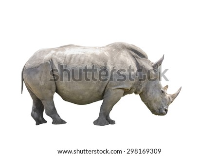 African black rhino on side view. Isolated. on white Background.